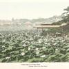 """Lotus Lake in a Tokyo Park. """"Gazing where the lilies blow""""."""