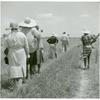 African American cotton plantation workers, hired as day laborers, walking next to cotton field at Hopson Plantation, Clarksdale, Mississippi Delta, Mississippi, August 1940.]