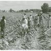 Bayou Bourbeaux Plantation operated by Bayou Bourbeaux Farmstead Association, a cooperative established through the cooperation of Farm Security Administration, August 1940.