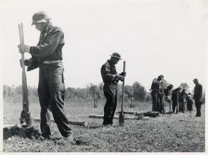 Civilian Conservation Corps boys putting up a fence, Greene County, Georgia, May 1941.