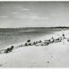 Group of mostly African American soldiers from the 25th Combat team lying on the beach and being taught how to swim by First Lieutenant Elmer R. Gray, Seventh Army Recreational Center, Fort Barrancas, Florida