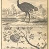 The ostrich, according to the Paris Academy of Science; Nest (or village as the Negroes call it) of the kubalot, or fisher bird
