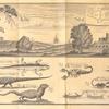 North prospect of the English & Dutch Forts at Akkra; [Beasts and insects on the coast of Guinea]; lizard; scorpion of natural size; snake; quoggelo; guano; scorpion of natural bigness; worms of different kinds