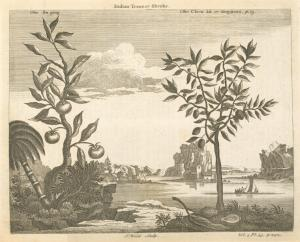 Indian trees or shrubs; The su ping; The chew kû or goyavas.