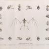 """Zoologie. Mammifères. Chauve-souris d'Égypte. Ostéologie. 1.1'.1"""". Nyctère de la thébaïde; 2.2'.2"""". Rhinolophe trident; 3.3'.3"""". Nyctinôme d'Égypte; 4.4'.4"""".4'"""". Taphien perforé; 5.5'.5"""". Vespertilion pipistrelle; 6. Taphien filet."""