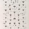 Zoologie. Hyménoptères. Abeilles-Perce-bois; Mégachiles.