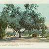 Orange Grove Ave., Pasadena, Calif.