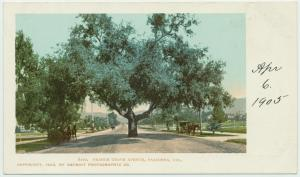 Orange Grove Ave., Pasadena, Calif.