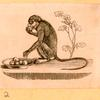 [Monkeys and apes.]