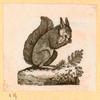 [Squirrels.]