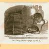 [Rats, mice and cavies.]