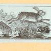 [Rabbits and other rodents.]