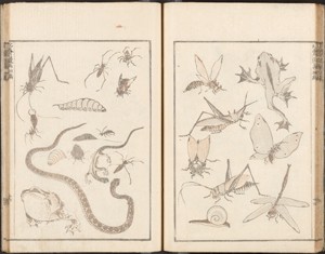 Insects, snake, and frogs.