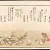 Shiohi no tsuto = Gifts of the ebb tide = The shell book.