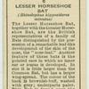 Lesser Horseshoe Bat.