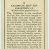 Common Bat or Pipistrelle.