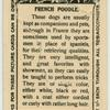 French Poodle.
