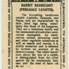Rabbit Bandicoot.