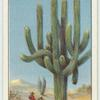 Do you know how plants live in the desert?