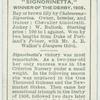 """""""Signorinetta"""" Derby, 1908."""