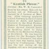 """""""Kenthis Plover""""."""