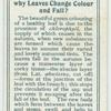 Do you know why leaves change colour and fall?