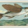 Do you know why the flying-fish flies?