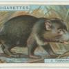 Do you know what a Tasmanian devil is?