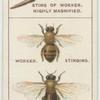 Do you know why bees sting and why they hum?