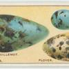 Do you know why birds' eggs vary in colour and shape?