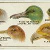 Do you know why birds' beaks vary in shape?