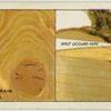 Do you know what causes knots and grain in wood?