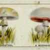 Do you know a toadstool from a mushroom?