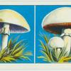 Do you know a mushroom from a toadstool?
