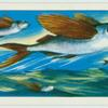 Do you know how the flying-fish flies?