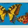 Do you know a butterfly from a moth?