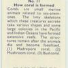 Do you know how coral is formed?