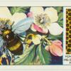 Do you know how a bee makes honey?
