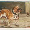Bull dog.