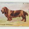 Coloured field spaniel.