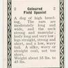 Coloured field spaniel.