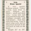 Irish water spaniel.
