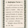 Bedington terrier.