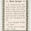 Welsh springer.