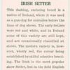 Irish Setter.