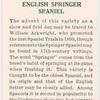 English Springer Spaniel.