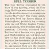 Bull Terrier.