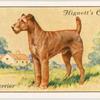 Irish Terrier.