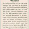 Whippet.