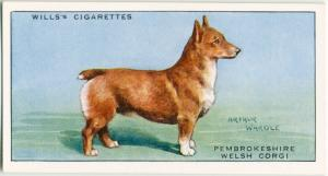 Pembrokeshire Welsh Corgie.  Digital ID: 1520159. New York Public Library